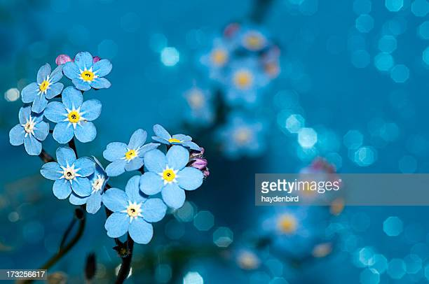 Forget me not flowers on a blue background
