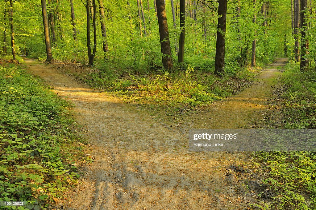 Forked Forest Path : Stock Photo