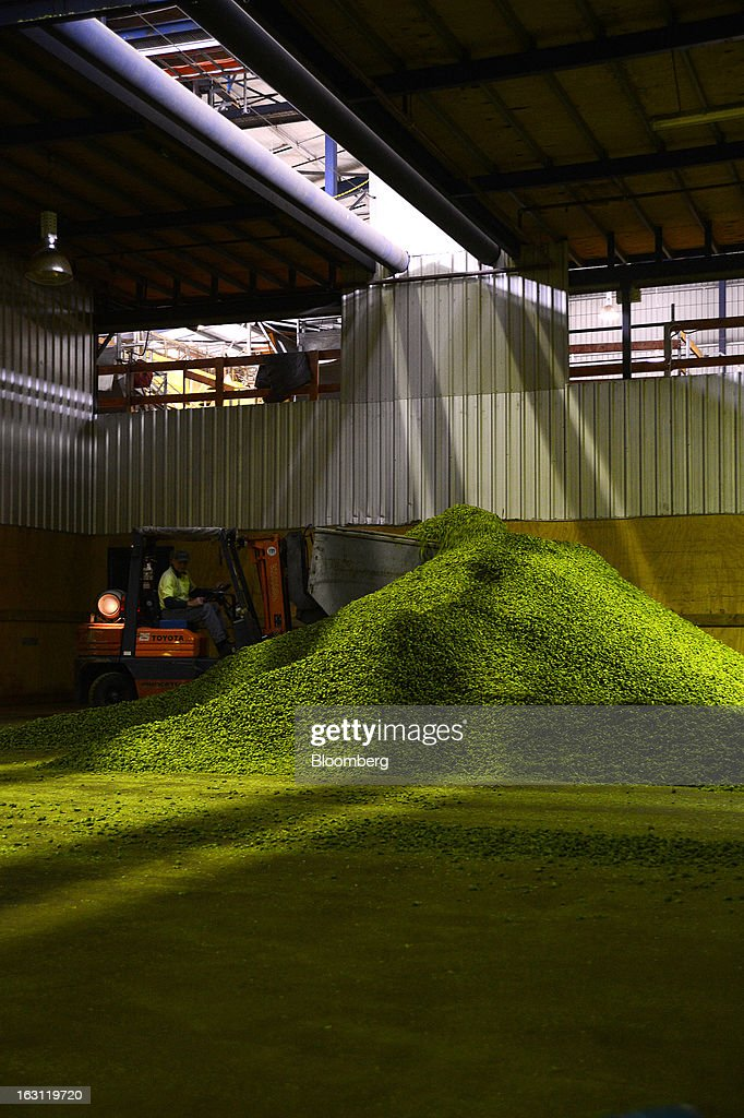 A forklift bucket scoops dried hops to be moved onto a conveyor belt at Hops Products Australia's operations in Bushy Park, Tasmania, Australia, on Tuesday, Feb. 26, 2013. Australia's Bureau of Statistics is scheduled to release fourth-quarter gross domestic product figures on March 6. Photographer: Carla Gottgens/Bloomberg via Getty Images