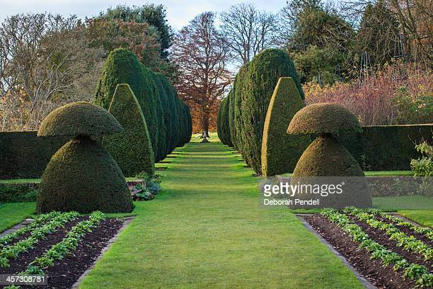 Formal garden with topiary hedges