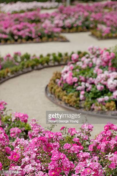 Formal Rose Garden and Paths