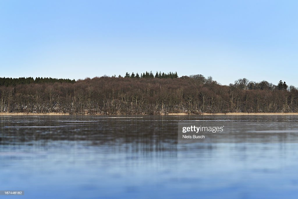Forrest reflections : Stock Photo