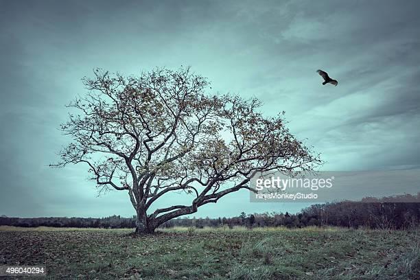 Forsaken Tree of Desolatation