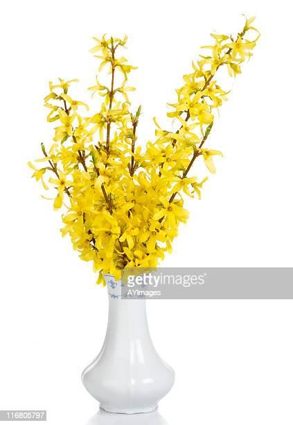 Forsythia blooms in vase