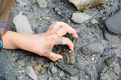 A young child finds a fossilised ammonite in the mud