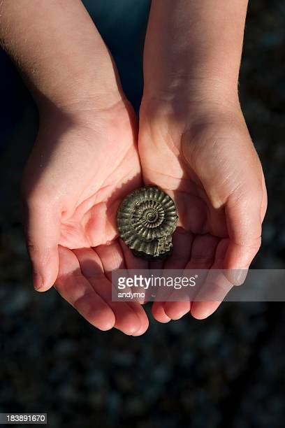 Fossil in a child's hands