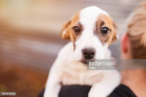 Foster-Hund mit neuen Eigentümer