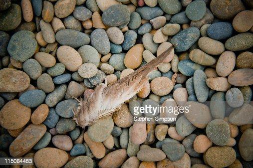 found bird's wing on beach pebbles : Stock Photo