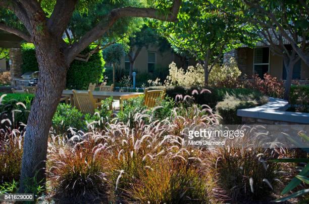 Fountain Grass Garden Setting