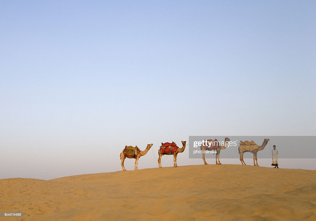 Bedouin Tent Camel Stock Photos & Bedouin Tent Camel Stock Images ...