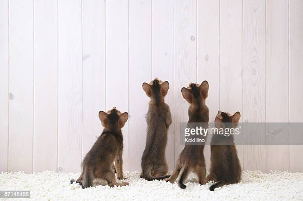 Four cats looking up, rear view