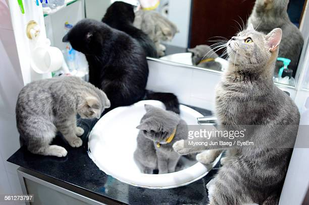 Four Cats Sitting In Bathroom Sink