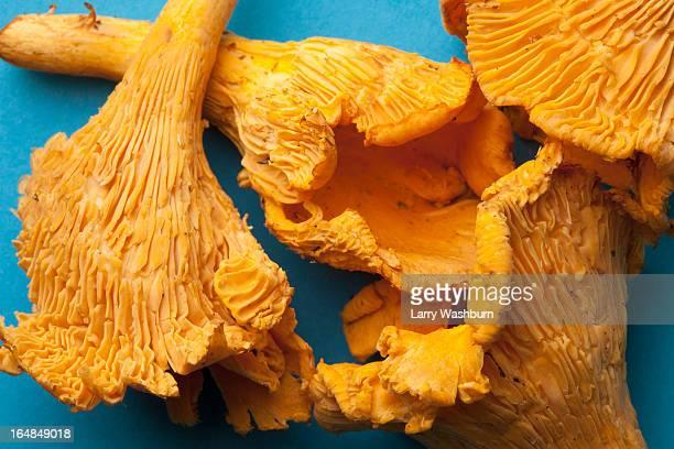 Four Chanterelle mushrooms in a heap, close-up