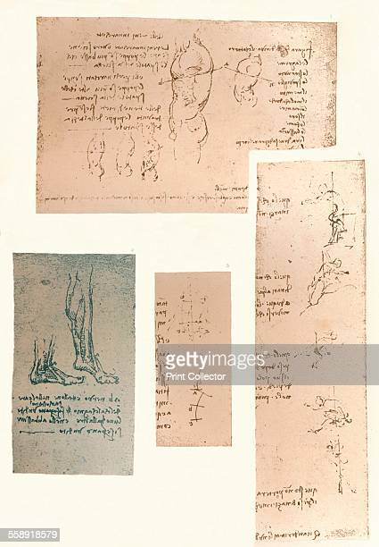 Four drawings illustrating the theory of the movements of the human figure c1472c1519 From The Literary Works of Leonardo Da Vinci Vol 1 by Jean Paul...