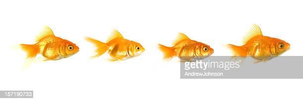 Vier Fisch