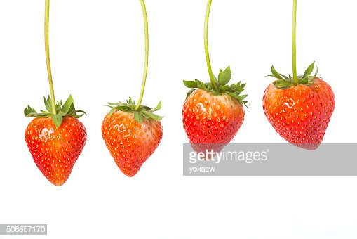 Four hanging red strawberries : Stock Photo