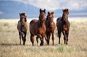 Four horses in the wild