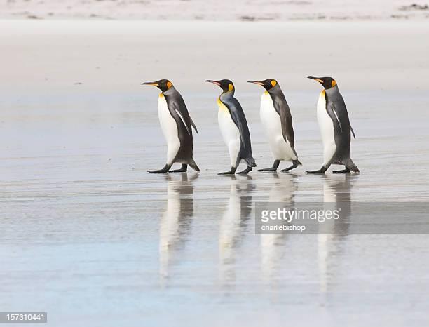 Four King Penguins on a beach