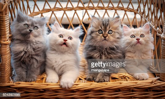Four kittens looking straight ahead