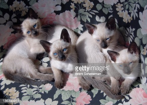 Four kittens sitting on coach