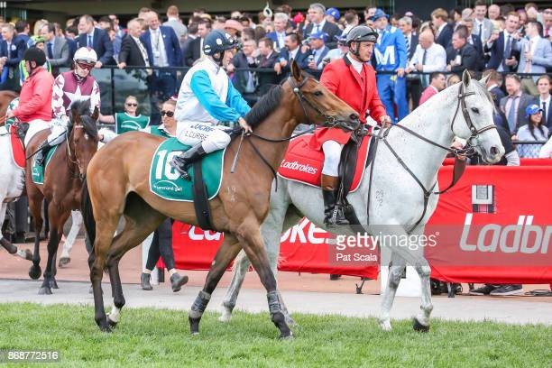 Four Koalas ridden by Luke Currie heads to the barrier before the Drummond Golf Vase at Moonee Valley Racecourse on October 28 2017 in Moonee Ponds...