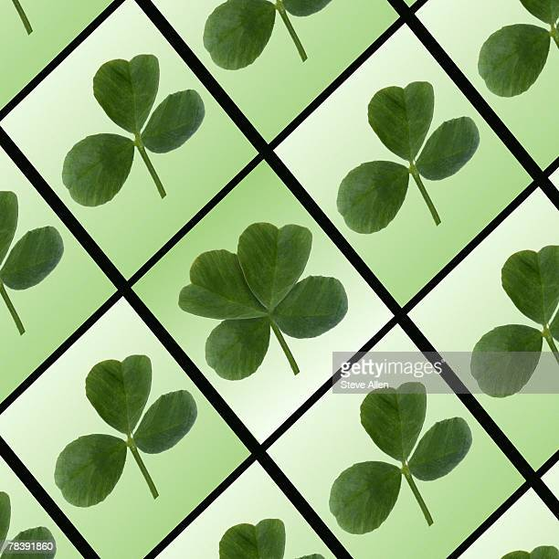 Four leaf clover amidst regular clover