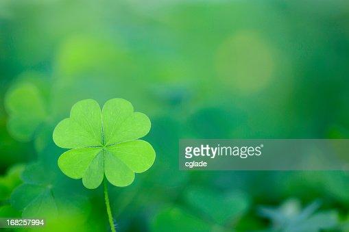 Four Leaf Clover Background Horizontal