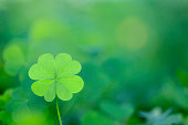Bright classic four leaf clover background. Selective focus
