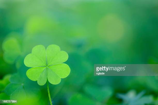 Four Leaf Clover Background Horizontal