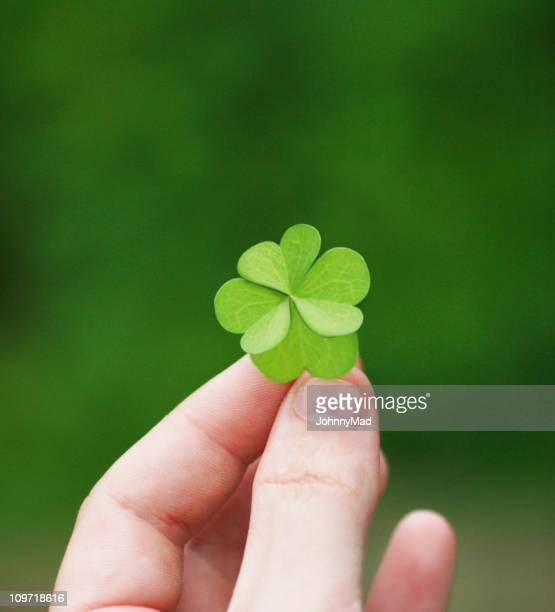 Four leaf clover held in a left hand