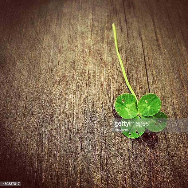 Four leaf clover on wooden table