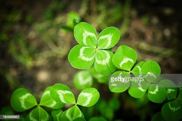 Four leaf Kleeblatt