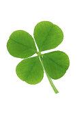 Shamrock symbol for St.Patrick's Day