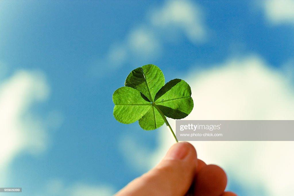 Four leaf clover with sky