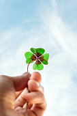 Closeup of a four leaf lucky clover held by a hand against blue sky as template