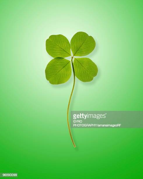 Four leafed clover, green background