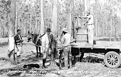 Four men including two finely dressed Caucasian men and two African American men who are working to gather raw gum one on a wagon carried by a horse...