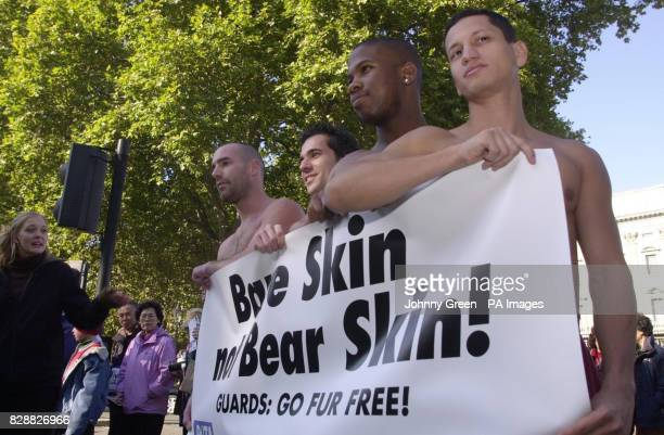 Four nude male models covered with a banner reading 'Bare Skin Not Bear Skin' demonstrate against the slaughter of Canadian black bears that end up...