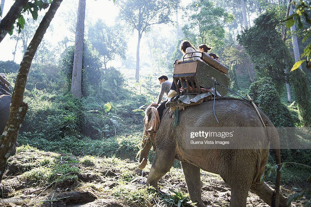 Four people Sitting on an Elephant, Chiang mai, Thailand