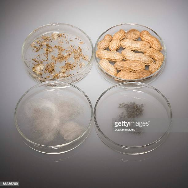 Four petri dishes with allergens
