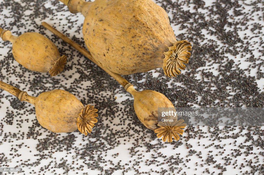 Four poppy head. grains poppy on a white : Foto de stock