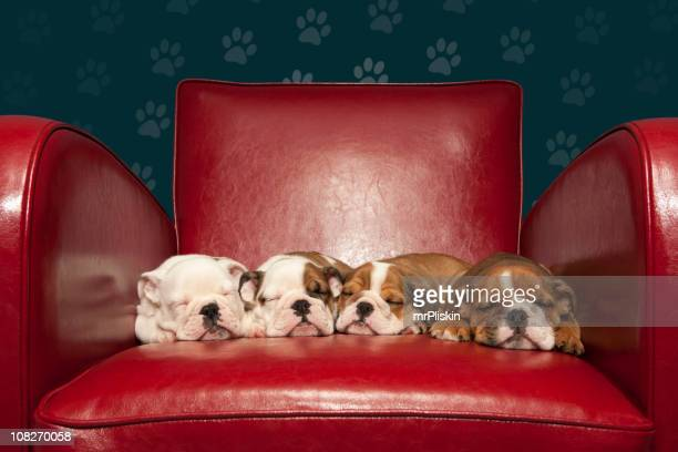Four puppies asleep on red armchair