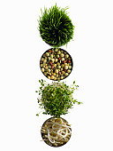 Four round dishes with wheat grass and sprouts on white background, overhead view