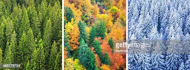 Quatro temporada floresta
