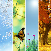 Four seasons collage, several images of beautiful natural landscapes at different time of the year - winter spring, summer, autumn, planet earth life cycle concept.