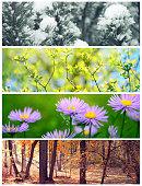 four seasons conceptual collage