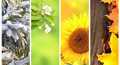 Four seasons of year. Collection of vertical nature banners with winter, spring, summer and autumn scenes