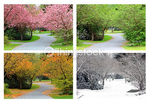 Four seasons on the same street. : Stock Photo