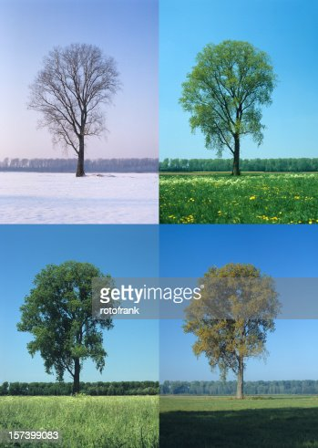 Four Seasons (image size XXL)