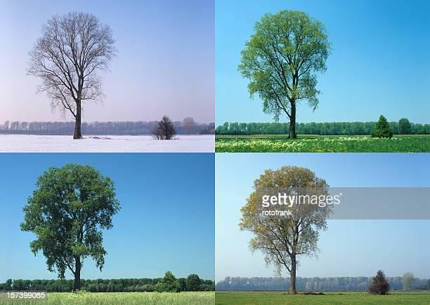 Four Seasons (Imagem Tamanho XXL